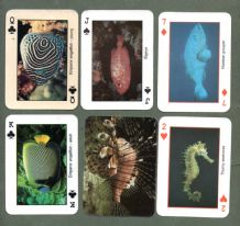 Collectible The red sea fish Egyptian souvenir playing cards.